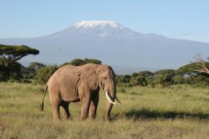 Der Kilimanjaro ist eines der Wahrzeichen Afrikas bewundern. Das mit 5895 Meter höchste Bergmassiv des Kontinents präsentierte sich der Reisegruppe aus Sand in vollster Schönheit, Elefanten davor eingeschlossen.