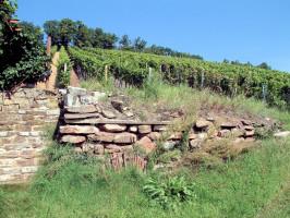 An den Südhängen des Hermannsberges befinden sich die Weinberge der Sander Winzer. Ein Sparziergang dorthin lohnt sich.