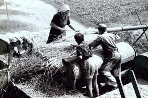 Kind beim Dreschen in Zeil, Am längsten waren Schulkinder in der Landwirtschaft tätig. Gefährlich war es auf einer Dreschmaschine. Dieses Foto aus Zeil entstand in den frühen 50er Jahren.