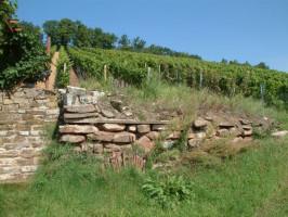 An den Südhängen des Hermannsberges bauen die Sander Winzer ihre oftmals prämierten Weine an.